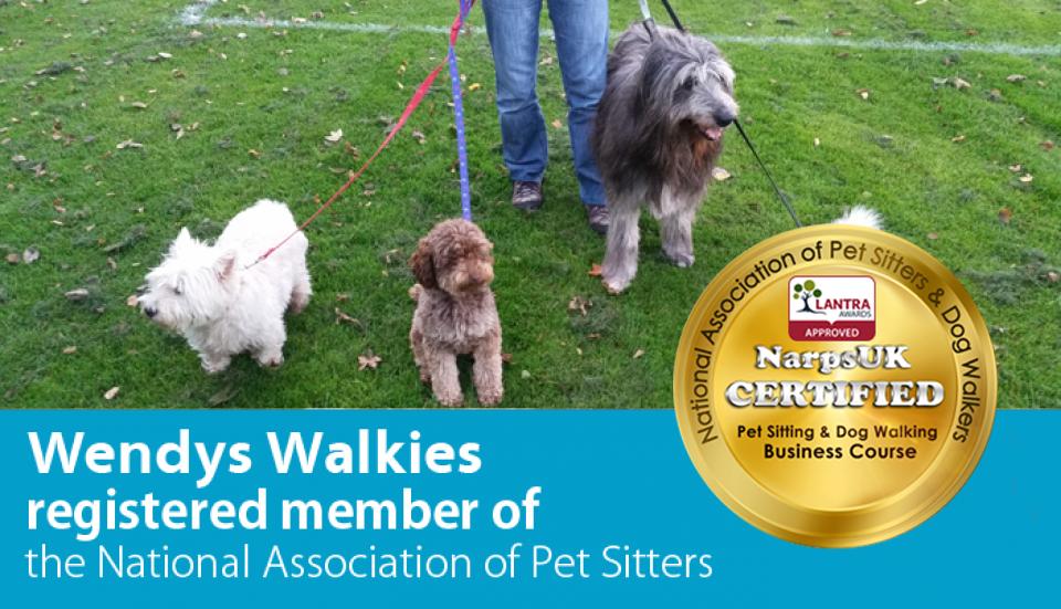 Dog Walking Pet Sitting Services Sighthill Wendys Walkies Edinburgh